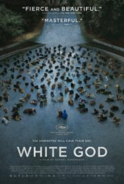 ดูหนังออนไลน์ฟรี White God (2014) 4 ขา ล่าปิดเมือง หนังเต็มเรื่อง หนังมาสเตอร์ ดูหนังHD ดูหนังออนไลน์ ดูหนังใหม่