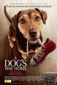 ดูหนังออนไลน์HD A Dog's Way Home (2019) เพื่อนรักผจญภัยสี่ร้อยไมล์ หนังเต็มเรื่อง หนังมาสเตอร์ ดูหนังHD ดูหนังออนไลน์ ดูหนังใหม่