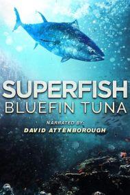 ดูหนังออนไลน์HD Superfish Bluefin Tuna (2012) หนังเต็มเรื่อง หนังมาสเตอร์ ดูหนังHD ดูหนังออนไลน์ ดูหนังใหม่
