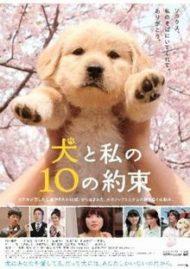 ดูหนังออนไลน์HD 10 Promises to My Dog (2008) 10 ข้อสัญญาน้องหมาของฉัน หนังเต็มเรื่อง หนังมาสเตอร์ ดูหนังHD ดูหนังออนไลน์ ดูหนังใหม่