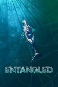 ดูหนังออนไลน์ฟรี Entangled: The Race to Save Right Whales from Extinction (2020) หนังเต็มเรื่อง หนังมาสเตอร์ ดูหนังHD ดูหนังออนไลน์ ดูหนังใหม่