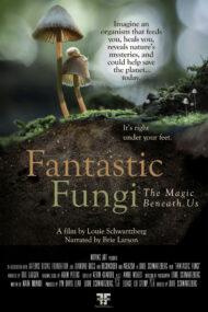 ดูหนังออนไลน์ฟรี Fantastic Fungi (2019) เห็ดมหัศจรรย์ หนังเต็มเรื่อง หนังมาสเตอร์ ดูหนังHD ดูหนังออนไลน์ ดูหนังใหม่
